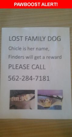 Please spread the word! Chicle was last seen in Whittier, CA 90604.  Message from Owner: Chicle had a badge and red shirt on. my daughter's pet please help her find her way home. 562-284-7181. I will offer a reward if you return her.  God bless  Nearest Address: Near Ahmann Ave & Oval Dr