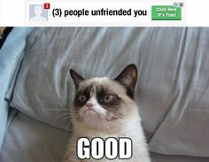 I laughed loudly at this grumpy cat meme. LOOK AT THAT FACE!!