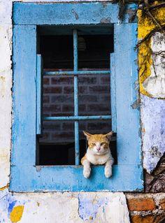 Um gato na janela …