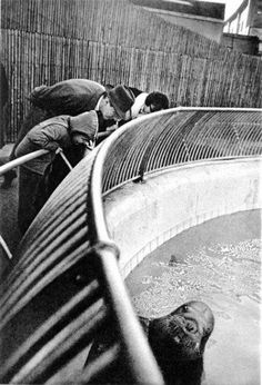 Gary Winogrand from his monograph 'The Animals', photos taken at the Zoo. Fabulous viewed as a series. 1970s I believe, though I could be off.
