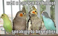 Funny parrot pictures! - Page 2 - Parrot Forum - Parrot Owner's Community