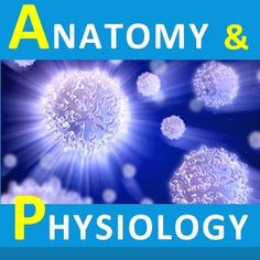 Renal Physiology and Acid-Base Balance. #Psychological #Disorders #hawaiirehab www.hawaiiislandrecovery.com