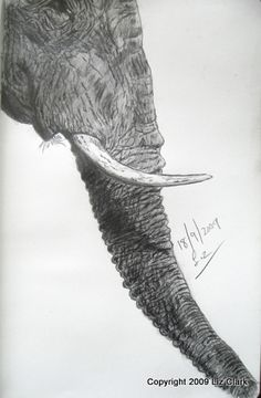 "#Elephants can grieve for their lost members. Titled ""Grieving for M40""  Sketched from a Nat Geo image"