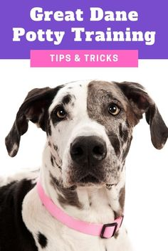 How to Potty Train an Older… #stopbarking Crate Training, Dog Training Tips, Leash Training, Training Pads, Training Schedule, Training Collar, Training Classes, Potty Training Puppy Apartment, Dane Puppies