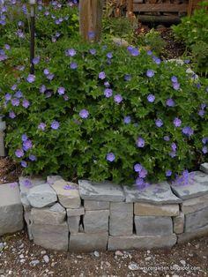 ber ideen zu terrassenpflanzen auf pinterest petunien pflanzen und h ngende blumenk rbe. Black Bedroom Furniture Sets. Home Design Ideas