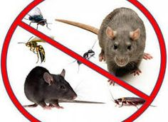 Selecting Realistic Advice For Home Termite Control	  http://termiteinspectionsydney.blogspot.com/2015/08/effortless-systems-in-home-termite.html