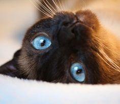 Cat ==