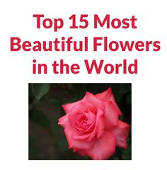 Top 15 Most Beautiful Flowers in the World Most Beautiful Flowers, Rose, World, Plants, Pink, The World, Plant, Roses, Planets