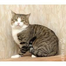 Картинки по запросу кошка фото