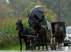 Ohio Amish Country - Christine B. © 2010