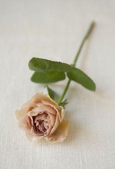 深みを帯びたカフェラテのような茶色のバラ`カフェラテ'。/暮らしの花飾り(「はんど&はあと」2012年9月号)