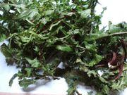 Pecorino herbs calzone | Vangelis Driskas recipes