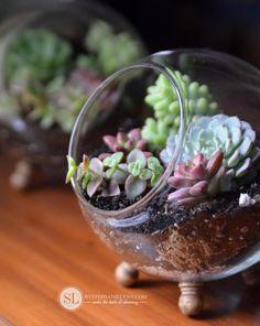 How to Plant a Succulent Terrarium #micahelsmakers