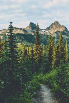expressions-of-nature:Wonderland Trail, Mount Rainier, Washington by Pedalhead'71