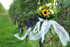 Yes In Italy è..WINE WEDDING