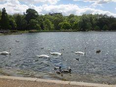 Lac Serpentine Hyde Park London http://fr.wikipedia.org/wiki/Hyde_Park