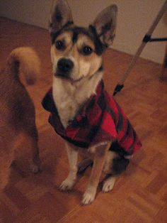 Upcycled Men's Lumberjack Shirt (This one is complete with cotton batting, for evtra warmth for my skinny dog.) Level of difficulty: Let...