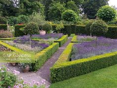 beds edged with hedge in ornamental garden