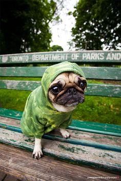 Green Alien Pug
