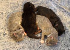Nova's 4 3 day old kittens. Cute little ball of sleeping kittens! Kittens, Cats, Nova, Sleep, Pictures, Animals, Gatos, Photos, Animales