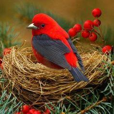 Solve ptáček v hnízdě jigsaw puzzle online with 64 pieces Cute Birds, Pretty Birds, Beautiful Birds, Animals Beautiful, Cute Animals, Exotic Birds, Colorful Birds, Exotic Pets, Kinds Of Birds