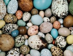 The world's most beautiful birds' eggs - life - 13 May 2014 - New Scientist