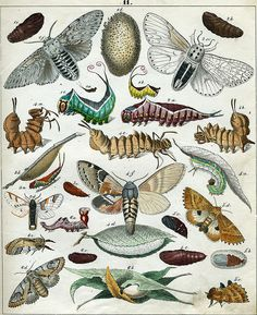 insects from old public domain book