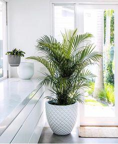 Big Indoor Plants, Hanging Plants, Indoor Planters, Outdoor Plants, Palm Plants, Outdoor Rooms, Potted Plants, Cat Safe Plants, Plantas Indoor