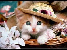 50 Pictures Of The Most Cute Cats and Kittens - Cute Kittens Videos Funny Cat Wallpaper, Tier Wallpaper, Cute Cat Wallpaper, Animal Wallpaper, Wallpaper Gallery, Funny Wallpapers, Computer Wallpaper, Wallpaper Jungle, Wallpaper Pictures
