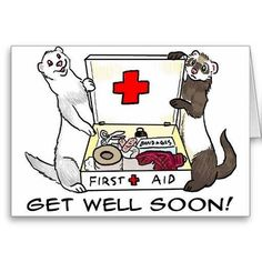 Get Well Ferrets Get Well Wishes, Love My Kids, Pet Store, Otters, Ferrets, Fur Babies, Fun Facts, Birthday Cards, Art Drawings