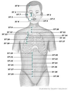 Stomach Meridian (ST), a.k.a. Foot Yang Ming acupressure points