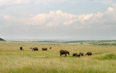 Safari Vacations | Treat yourself to a new vacation read.