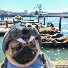 He realized he will never be a seal