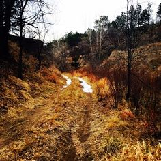This is a random trail I stumbled on while on a trail run in #colorado. The melancholy feel makes me want to go write every time I see it.