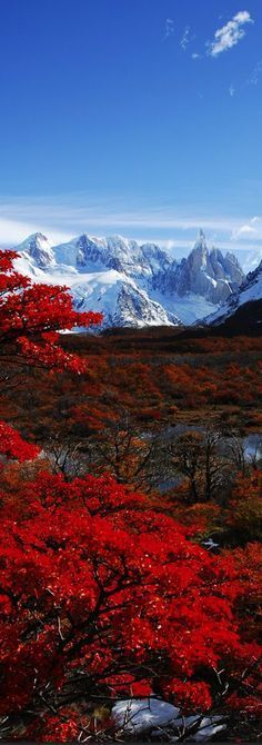 The world's a beautiful place✯ Cerro Torre and autumn leaves, Parque Nacional Los Glaciers, Patagonia, Argentina Places Around The World, Oh The Places You'll Go, Around The Worlds, Beautiful World, Beautiful Places, Beautiful Pictures, Amazing Places, Landscape Photography, Nature Photography