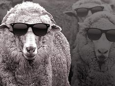 MERINO WOOL - Merino wool is one of the most fine and versatile amongst the natural fibres. Due to its natural qualities and benefits, including breathability and insulating capacity, Merino wool has historically been used across different seasons. It has the unique ability to keep the wearer warm in cold temperatures and cool and fresh in the hottest climates.  Cool Wool fibres are more than three times finer than the average human hair
