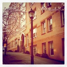 Capitol Hill in bloom, Seattle
