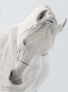 White Stallion  by mari-mi on deviantART