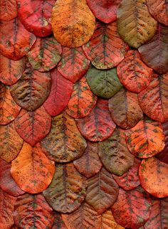 horticultural art06