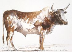 Contemporary South African Artist Erna Wade paints Nguni, wildlife and other African themes in Oils, Acrylic, Mixed Media and Watercolour African Theme, South African Artists, Watercolours, Watercolor Paintings, Moose Art, Wildlife, Paper, Water Colors, Watercolour Paintings