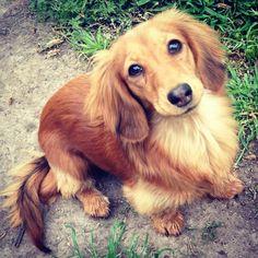 Pretty Pup!