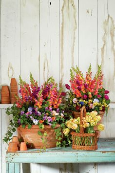 Snapdragons, Penny Violas, Tulips, Parsley and Ivy | Enjoy nonstop color all season long with these container gardening ideas and plant suggestions. You'll find beautiful pots to adorn porches and patios. You may not have the space or patience to become a master gardener, but anyone can master container gardening. It's a cinch—all you need is a container (a planter in true gardener speak), potting soil, some plants and you're ready to go. Thinking of container gardening like this, it's easy…