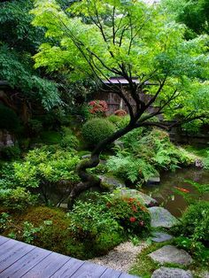 宝泉院:鶴亀庭園 Bonzai.....would love to re-create this in the Bronx