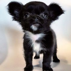 AHHHMYGOD. I could just eat this puppy up, it's so cute!