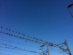Birds in the city Sultanahmet Istanbul Turkey