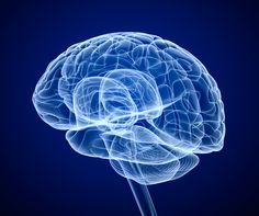 what is the basal ganglia