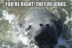 Thank you calming manatee, after that jerk made me cry, I needed your manatee smile.