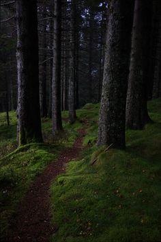 Kalfaret, Bergen, Norway