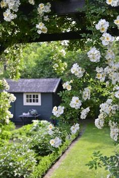 blue garden shed; white blossoming tree