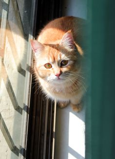 Cat by SFA Photographer, via 500px